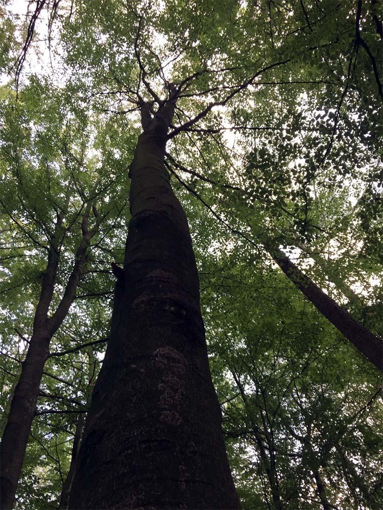 Wisseling van perspectief, de boom van onderaf gezien.